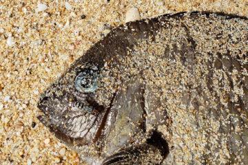 The Fish | Humanitou Blog