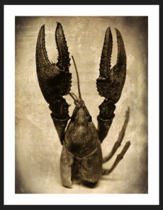 Crawfish I, Reverence Collection | Fine Art Photography by Adam Williams