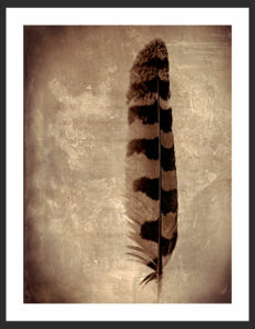 Feather (Tawny Owl), Reverence Collection by Adam Williams
