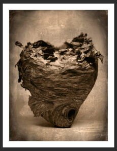 Hornet Nest | Reverence Art Photography by Adam Williams